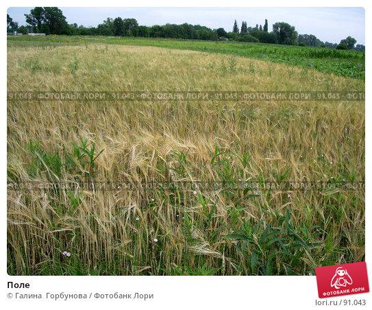 Поле, фото № 91043, снято 9 июля 2005 г. (c) Галина  Горбунова / Фотобанк Лори