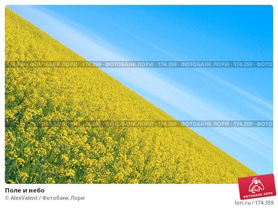 Купить «Поле и небо», фото № 174359, снято 11 мая 2007 г. (c) AlexValent / Фотобанк Лори