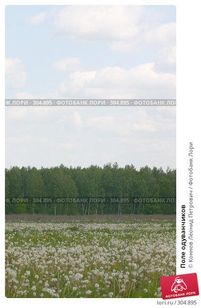 Купить «Поле одуванчиков», фото № 304895, снято 27 мая 2008 г. (c) Коннов Леонид Петрович / Фотобанк Лори