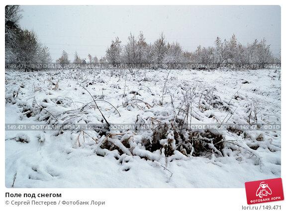 Поле под снегом, фото № 149471, снято 14 октября 2007 г. (c) Сергей Пестерев / Фотобанк Лори