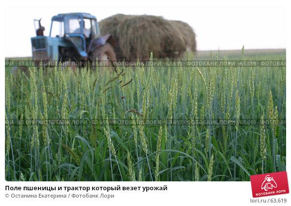 Купить «Поле пшеницы и трактор который везет урожай», фото № 63619, снято 15 июля 2007 г. (c) Останина Екатерина / Фотобанк Лори