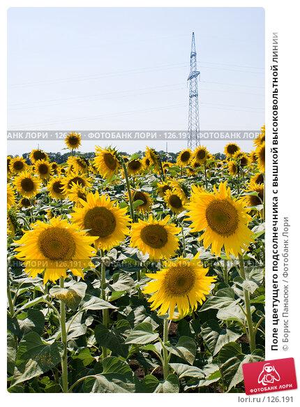 Поле цветущего подсолнечника с вышкой высоковольтной линии, фото № 126191, снято 18 июля 2007 г. (c) Борис Панасюк / Фотобанк Лори