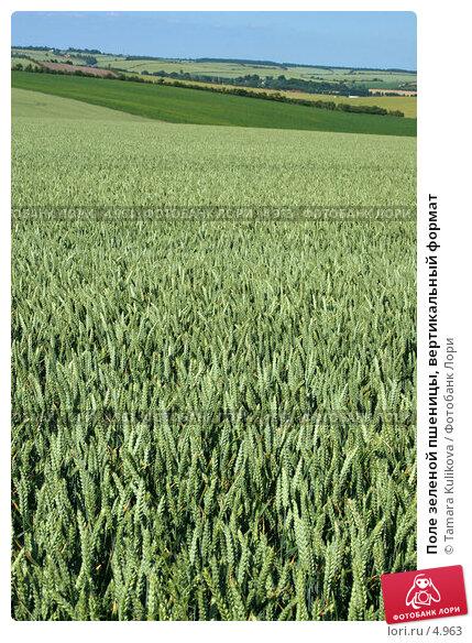 Поле зеленой пшеницы, вертикальный формат, фото № 4963, снято 28 июня 2006 г. (c) Tamara Kulikova / Фотобанк Лори