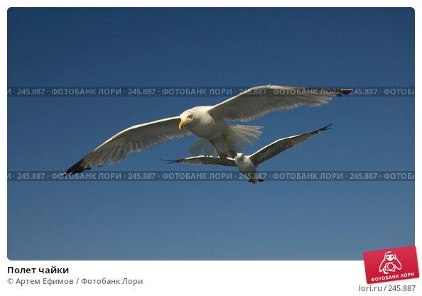 Полет чайки, фото № 245887, снято 16 июля 2007 г. (c) Артем Ефимов / Фотобанк Лори