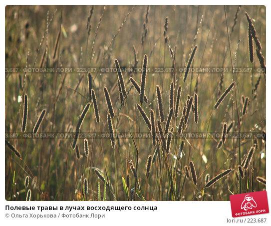 Полевые травы в лучах восходящего солнца, фото № 223687, снято 22 сентября 2017 г. (c) Ольга Хорькова / Фотобанк Лори