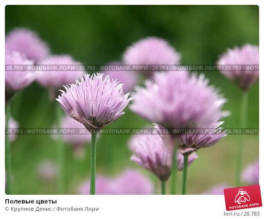 Полевые цветы, фото № 28783, снято 11 июня 2005 г. (c) Крупнов Денис / Фотобанк Лори