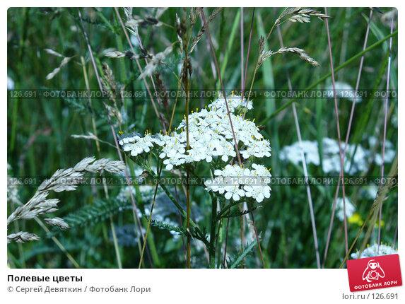 Полевые цветы, фото № 126691, снято 8 июля 2007 г. (c) Сергей Девяткин / Фотобанк Лори