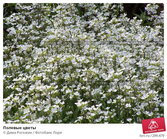 Полевые цветы, фото № 299479, снято 25 мая 2008 г. (c) Дима Рогожин / Фотобанк Лори