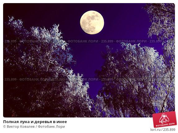 Купить «Полная луна и деревья в инее», фото № 235899, снято 23 ноября 2017 г. (c) Виктор Ковалев / Фотобанк Лори
