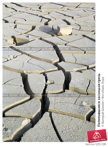 Полопавшаяся засохшая грязь, фото № 273139, снято 28 ноября 2007 г. (c) Валерий Шанин / Фотобанк Лори