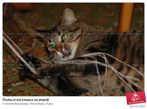 Полосатая кошка за игрой, фото № 923, снято 13 февраля 2006 г. (c) Юлия Яковлева / Фотобанк Лори