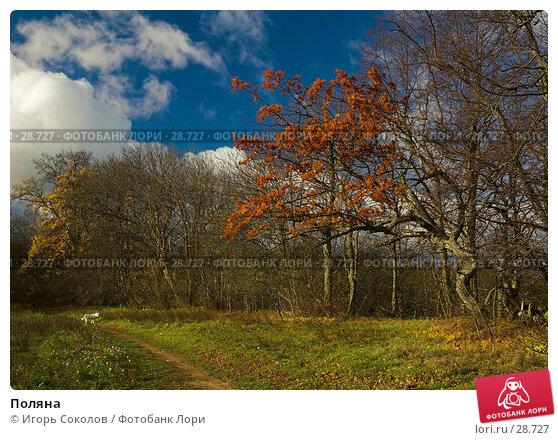 Купить «Поляна», фото № 28727, снято 28 октября 2006 г. (c) Игорь Соколов / Фотобанк Лори