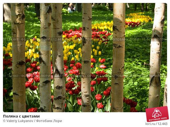 Купить «Поляна с цветами», фото № 12443, снято 26 мая 2006 г. (c) Valeriy Lukyanov / Фотобанк Лори