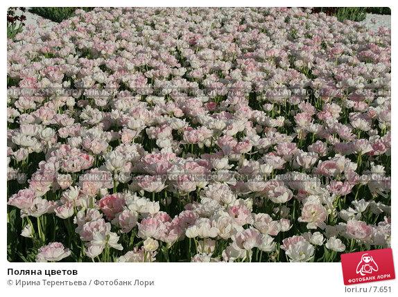 Поляна цветов, эксклюзивное фото № 7651, снято 1 июня 2006 г. (c) Ирина Терентьева / Фотобанк Лори