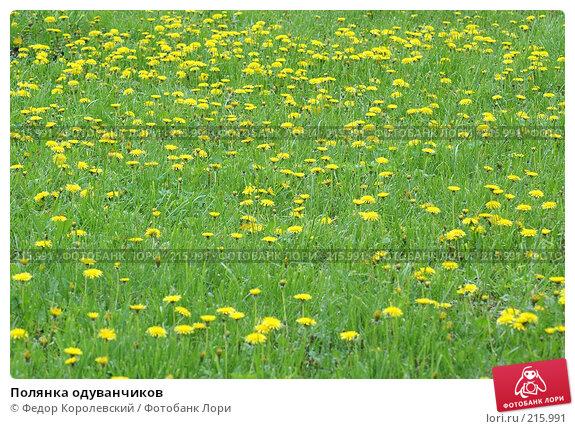 Купить «Полянка одуванчиков», фото № 215991, снято 2 мая 2005 г. (c) Федор Королевский / Фотобанк Лори