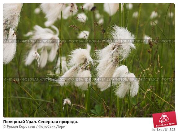 Купить «Полярный Урал. Северная природа.», фото № 81523, снято 1 августа 2007 г. (c) Роман Коротаев / Фотобанк Лори