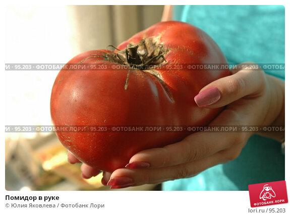 Помидор в руке, фото № 95203, снято 16 августа 2006 г. (c) Юлия Яковлева / Фотобанк Лори
