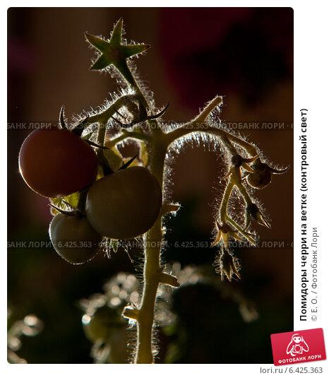 Купить «Помидоры черри на ветке (контровый свет)», фото № 6425363, снято 21 сентября 2014 г. (c) Екатерина Овсянникова / Фотобанк Лори