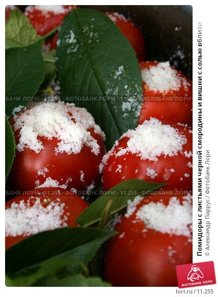 Купить «Помидоры с листьями черной смородины и вишни с солью вблизи», фото № 11255, снято 27 августа 2006 г. (c) Александр Паррус / Фотобанк Лори