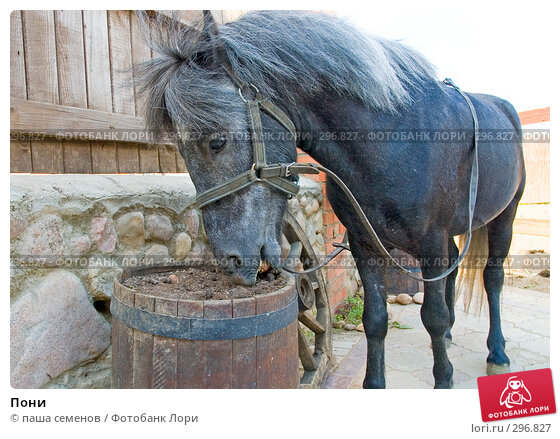 Пони, фото № 296827, снято 6 июня 2007 г. (c) паша семенов / Фотобанк Лори