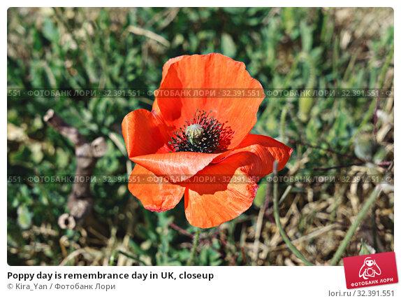 Купить «Poppy day is remembrance day in UK, closeup», фото № 32391551, снято 30 апреля 2017 г. (c) Kira_Yan / Фотобанк Лори