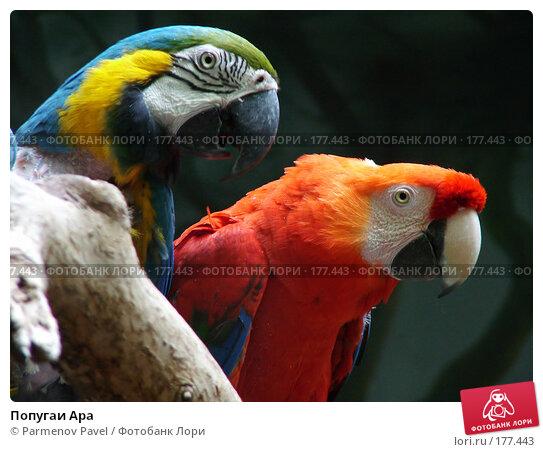 Купить «Попугаи Ара», фото № 177443, снято 7 мая 2005 г. (c) Parmenov Pavel / Фотобанк Лори