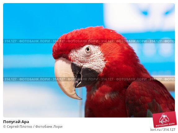 Попугай Ара, фото № 314127, снято 12 апреля 2008 г. (c) Сергей Плотко / Фотобанк Лори