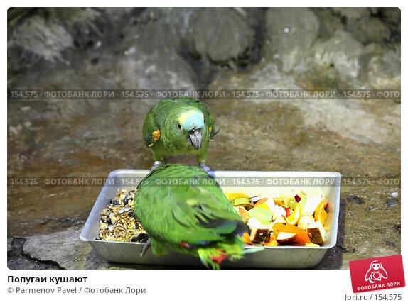 Попугаи кушают, фото № 154575, снято 11 декабря 2007 г. (c) Parmenov Pavel / Фотобанк Лори