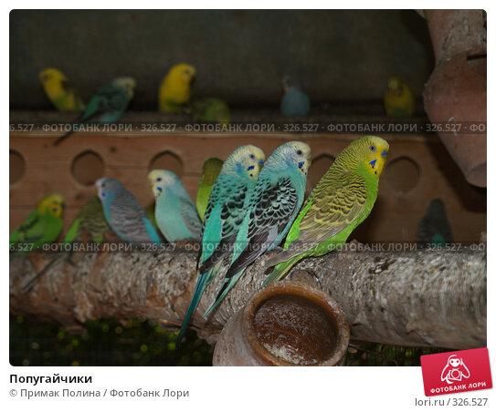 Попугайчики, фото № 326527, снято 10 сентября 2006 г. (c) Примак Полина / Фотобанк Лори