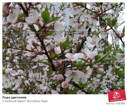 Пора цветения, фото № 100859, снято 9 мая 2005 г. (c) Калёнов Павел / Фотобанк Лори