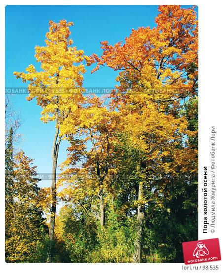 Купить «Пора золотой осени», фото № 98535, снято 26 апреля 2018 г. (c) Людмила Жмурина / Фотобанк Лори