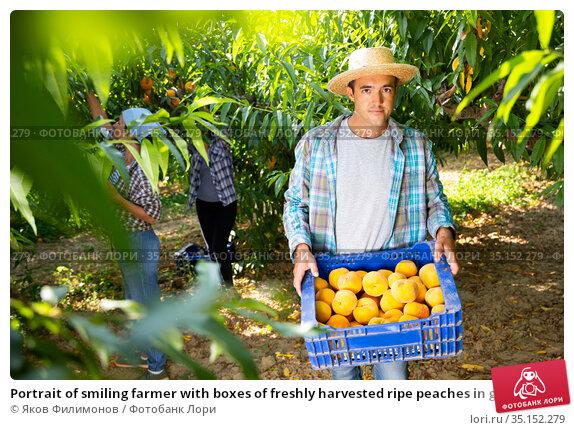 Portrait of smiling farmer with boxes of freshly harvested ripe peaches in garden. Стоковое фото, фотограф Яков Филимонов / Фотобанк Лори