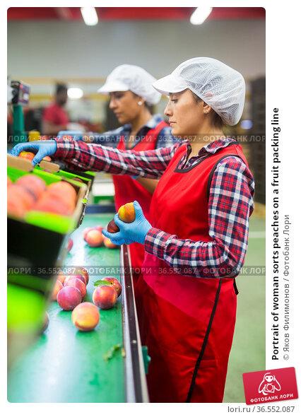 Portrait of woman sorts peaches on a fruit packing line. Стоковое фото, фотограф Яков Филимонов / Фотобанк Лори