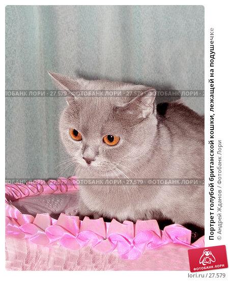 Портрет голубой британской кошки, лежащей на подушечке, фото № 27579, снято 6 марта 2007 г. (c) Андрей Жданов / Фотобанк Лори