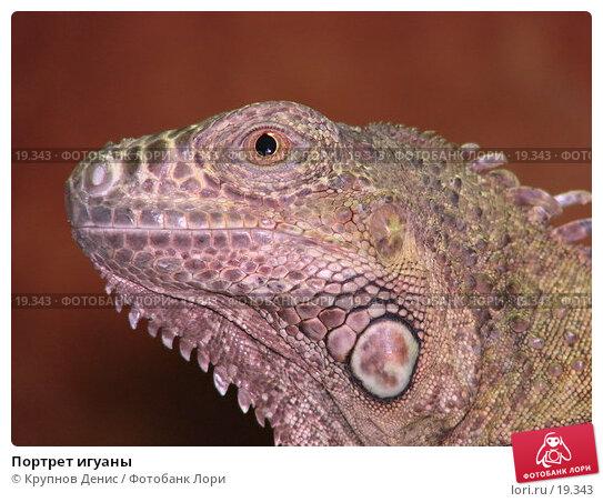 Портрет игуаны, фото № 19343, снято 16 декабря 2006 г. (c) Крупнов Денис / Фотобанк Лори