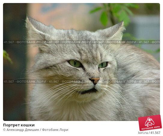 Портрет кошки, фото № 41567, снято 12 июня 2004 г. (c) Александр Демшин / Фотобанк Лори