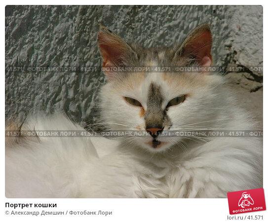 Купить «Портрет кошки», фото № 41571, снято 20 июля 2004 г. (c) Александр Демшин / Фотобанк Лори