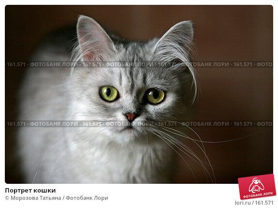 Портрет кошки, фото № 161571, снято 24 июня 2006 г. (c) Морозова Татьяна / Фотобанк Лори