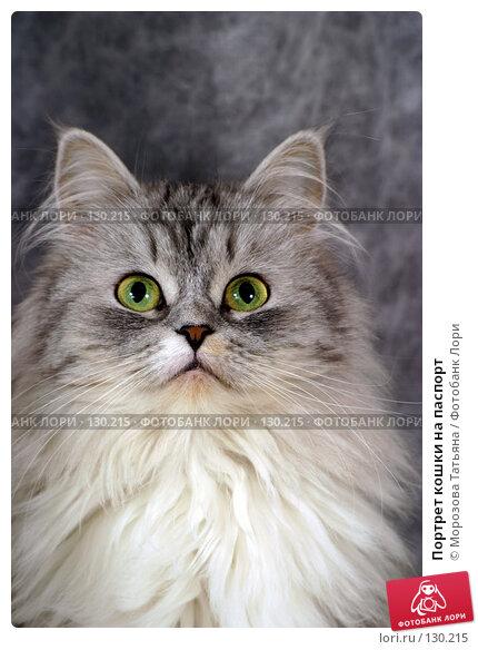 Портрет кошки на паспорт, фото № 130215, снято 19 декабря 2004 г. (c) Морозова Татьяна / Фотобанк Лори