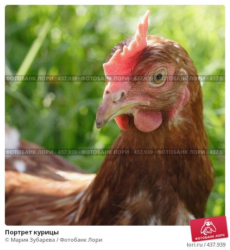 Портрет курицы. Стоковое фото, фотограф Мария Зубарева / Фотобанк Лори