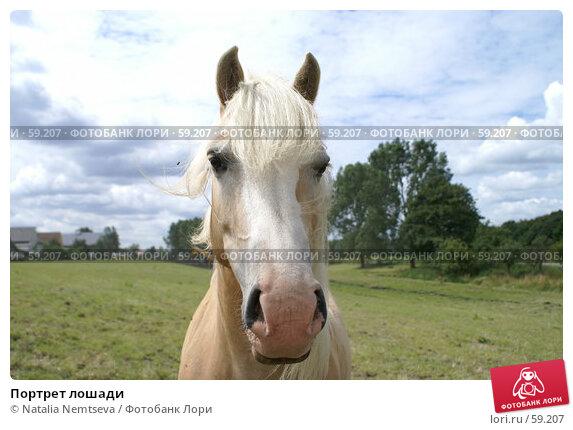 Портрет лошади, эксклюзивное фото № 59207, снято 27 июня 2007 г. (c) Natalia Nemtseva / Фотобанк Лори
