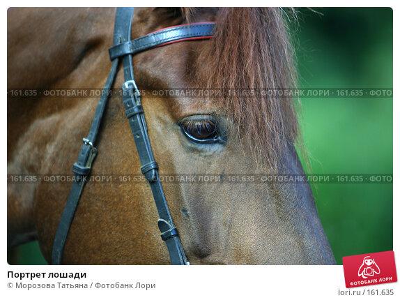 Портрет лошади, фото № 161635, снято 12 августа 2006 г. (c) Морозова Татьяна / Фотобанк Лори