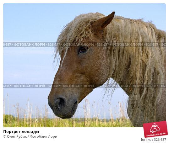 Портрет лошади, фото № 326687, снято 9 июня 2008 г. (c) Олег Рубик / Фотобанк Лори