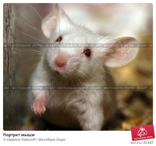 Портрет мыши, фото № 33647, снято 17 апреля 2007 г. (c) Vladimir Fedoroff / Фотобанк Лори