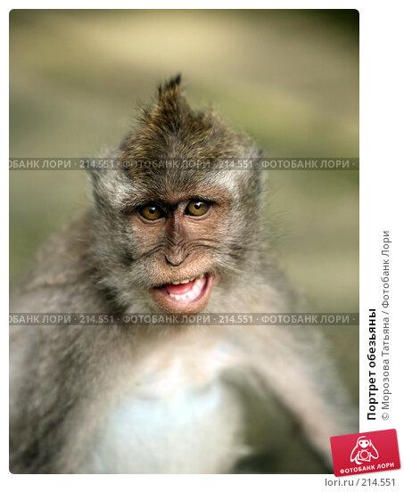 Купить «Портрет обезьяны», фото № 214551, снято 24 февраля 2008 г. (c) Морозова Татьяна / Фотобанк Лори
