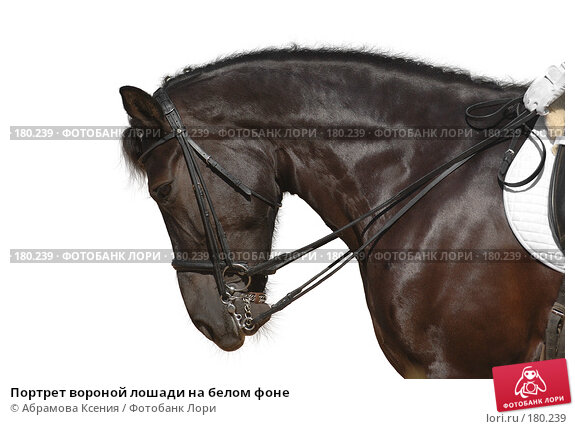 Портрет вороной лошади на белом фоне, фото № 180239, снято 12 августа 2006 г. (c) Абрамова Ксения / Фотобанк Лори