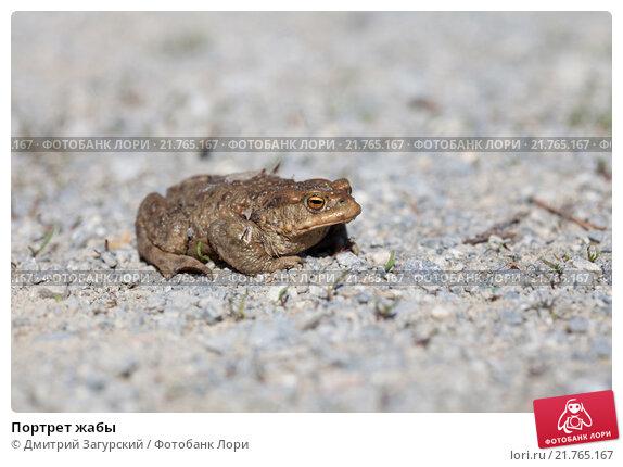Портрет жабы. Стоковое фото, фотограф Дмитрий Загурский / Фотобанк Лори