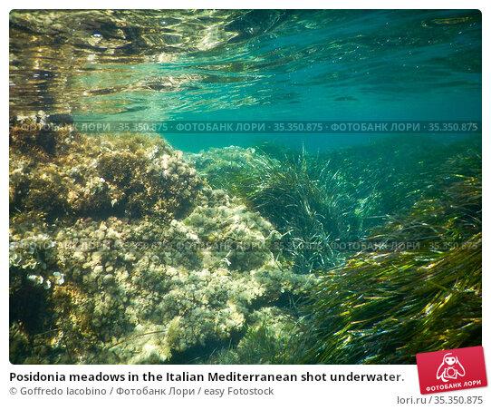 Posidonia meadows in the Italian Mediterranean shot underwater. Стоковое фото, фотограф Goffredo Iacobino / easy Fotostock / Фотобанк Лори