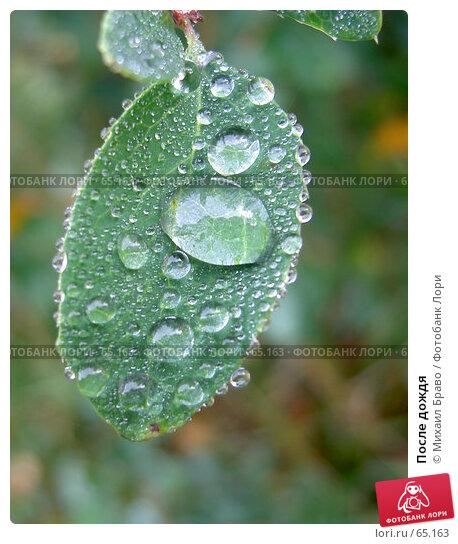 После дождя, фото № 65163, снято 2 октября 2005 г. (c) Михаил Браво / Фотобанк Лори