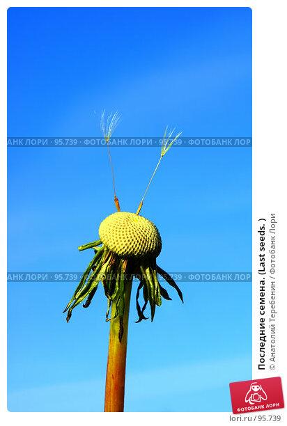 Последние семена. (Last seeds. ), фото № 95739, снято 23 сентября 2007 г. (c) Анатолий Теребенин / Фотобанк Лори